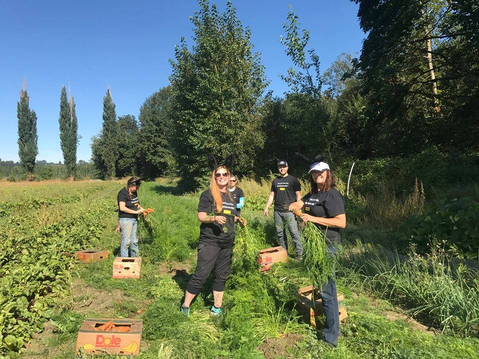 Food Bank Gleaning